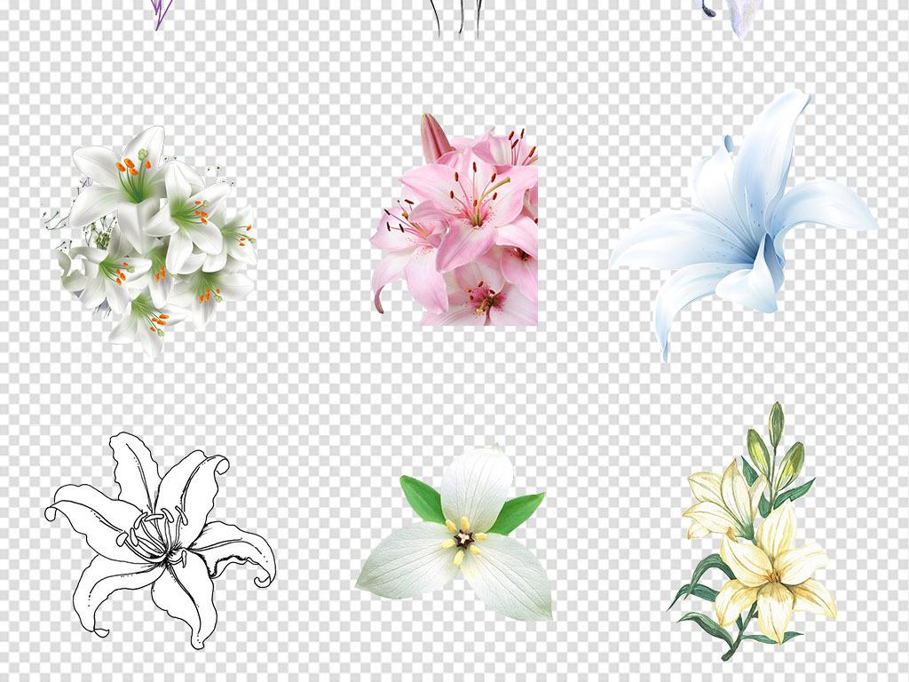 鲜花花卉png免抠素材图片 模板下载 49.15MB 花卉大全 自然