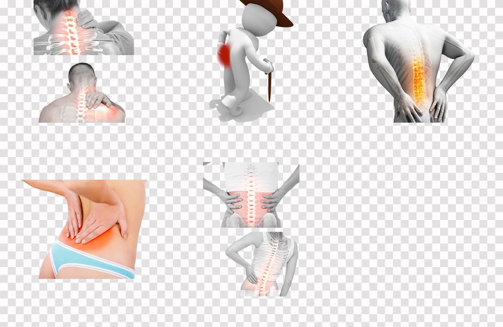 人体内部结构分布图脊椎关节骨架骨骼png素材