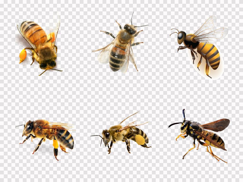 免抠蜘蛛海报素材蜂蜜>真实蜜蜂价格采蜜素材广告设计png动物元素胶自然是多少钱一斤图片