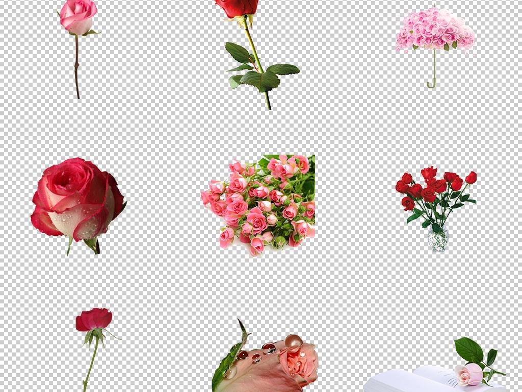 单只玫瑰花壁纸 - 【花卉百科网】