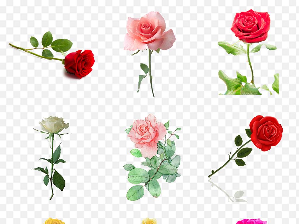 七夕来临单枝玫瑰花爆涨10元涨到18元 网友:第二天再买就是傻子