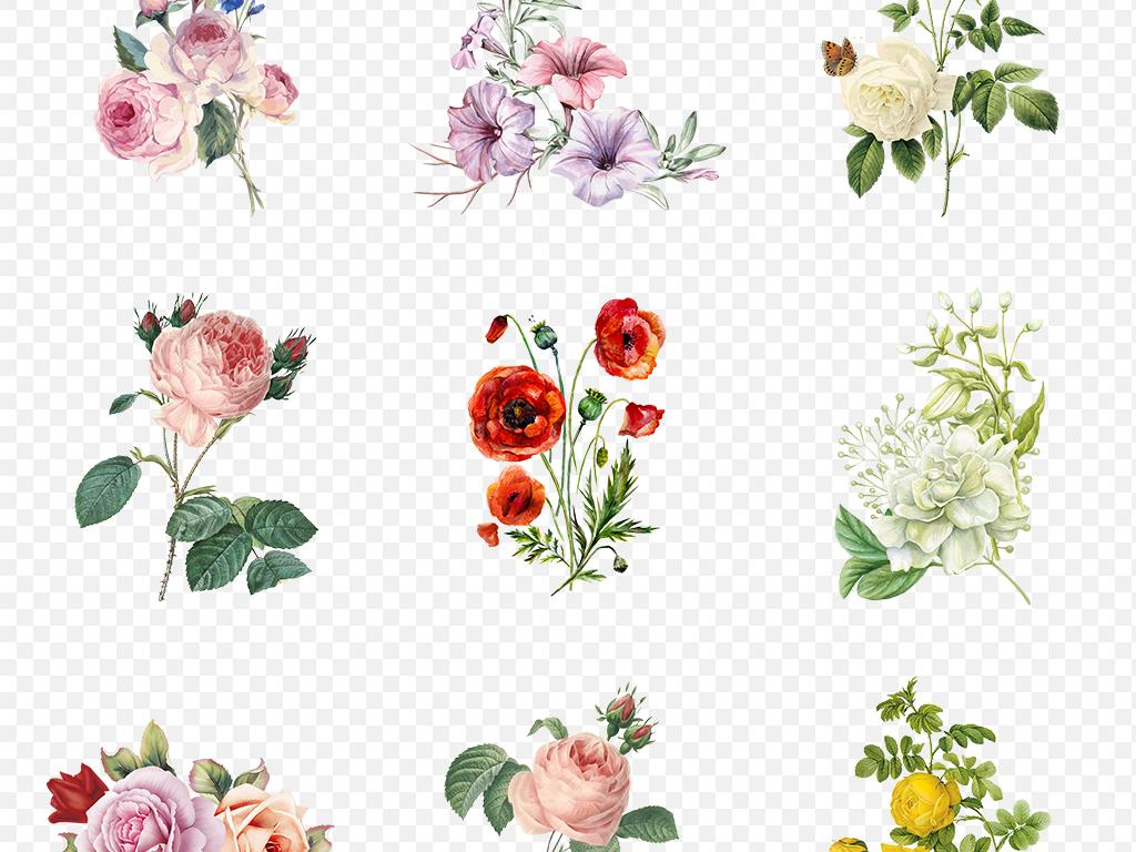 挂画花鸟花卉花藤手绘花花卉花语春天素材小报蝴蝶