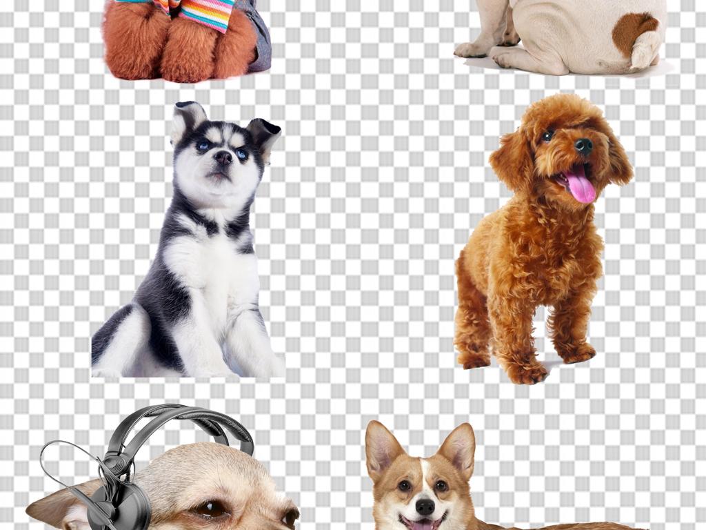 手绘狗小狗素材小狗背景动物手绘小狗宠物小狗白色小狗单身狗狗
