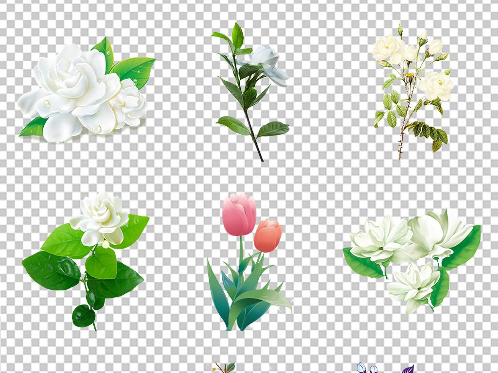 手绘素材高清海报精美图片png卡通背景花卉素材花朵茉莉花元素花卉