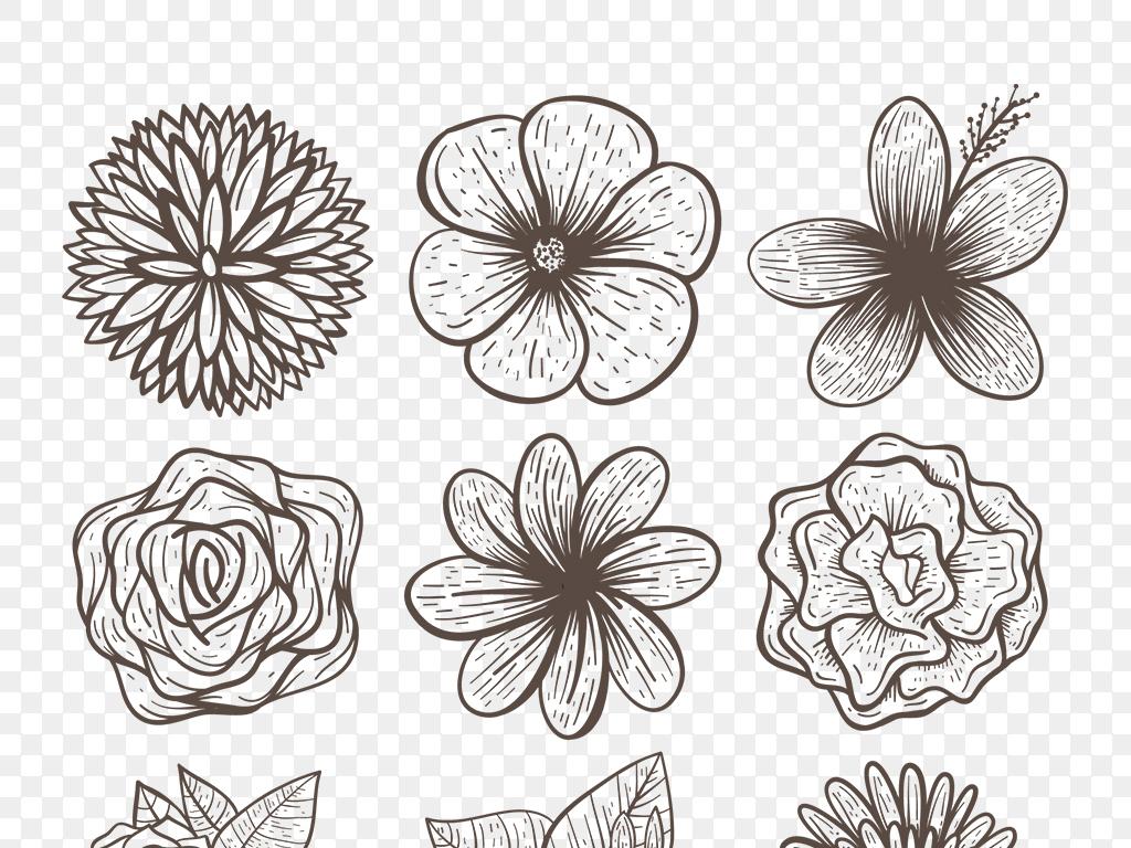 ai矢量手绘线描黑白花卉线稿植物免抠素材