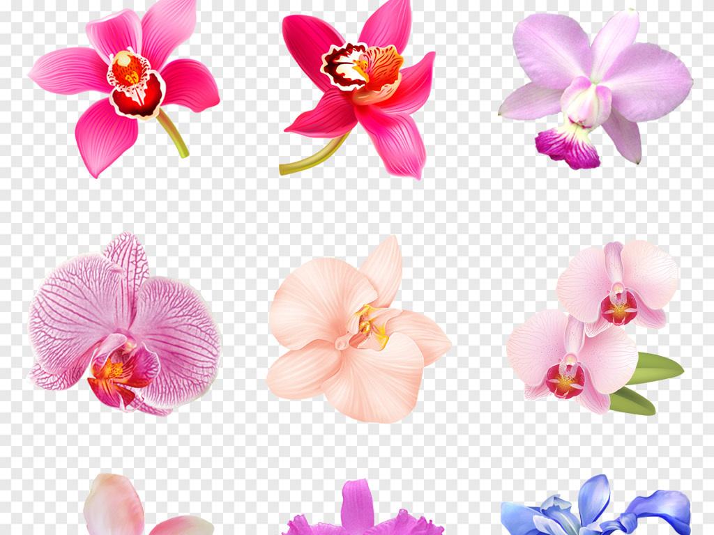50款手绘唯美蝴蝶兰兰花花卉花朵背景png免扣素材