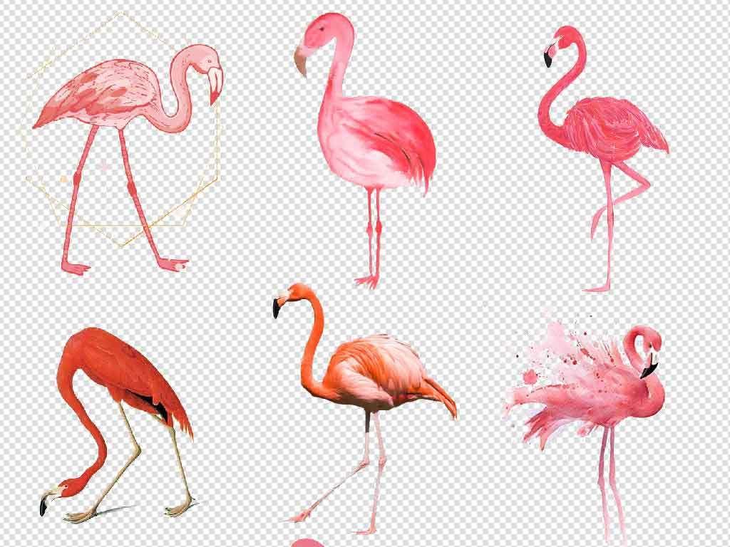 火烈鸟插画图片卡通火烈鸟火烈鸟壁纸火烈鸟画火烈鸟水彩画火烈鸟水彩