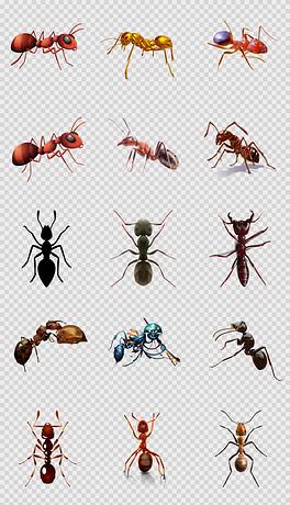 可爱卡通蚂蚁手绘小蚂蚁卡通动物幼儿园背景png素材