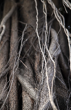 树根特写图片素材 树根特写图片素材下载 树根特写背景素材 树根特写模板下载 我图网