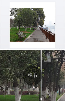 绿色大树 公园长椅 街边景色 绿化街道