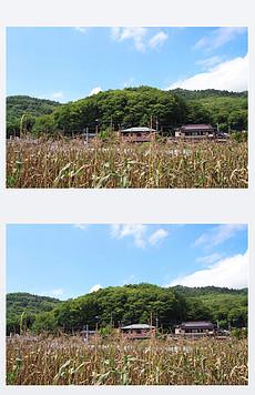 PPT日本木屋 PPT格式日本木屋素材图片 PPT日本木屋设计模板 我图网