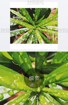 JPG绿小树 JPG格式绿小树素材图片 JPG绿小树设计模板 我图网