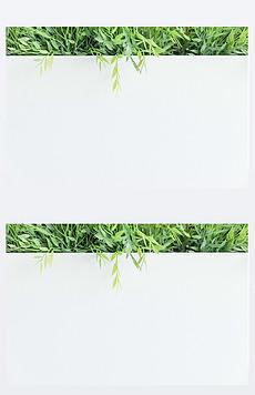 绿叶 白底图片素材 绿叶 白底图片素材下载 绿叶 白底背景素材 绿叶 白底模板下载 我图网图片