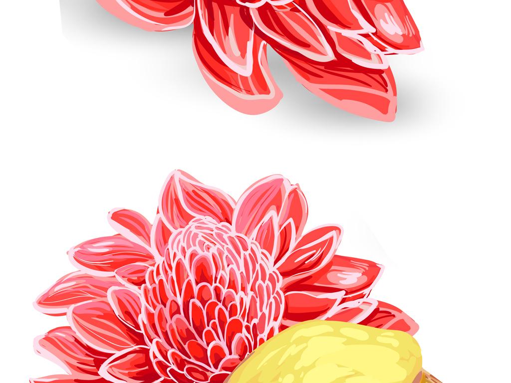 生姜叶手绘生姜生姜茶新鲜的生姜花矢