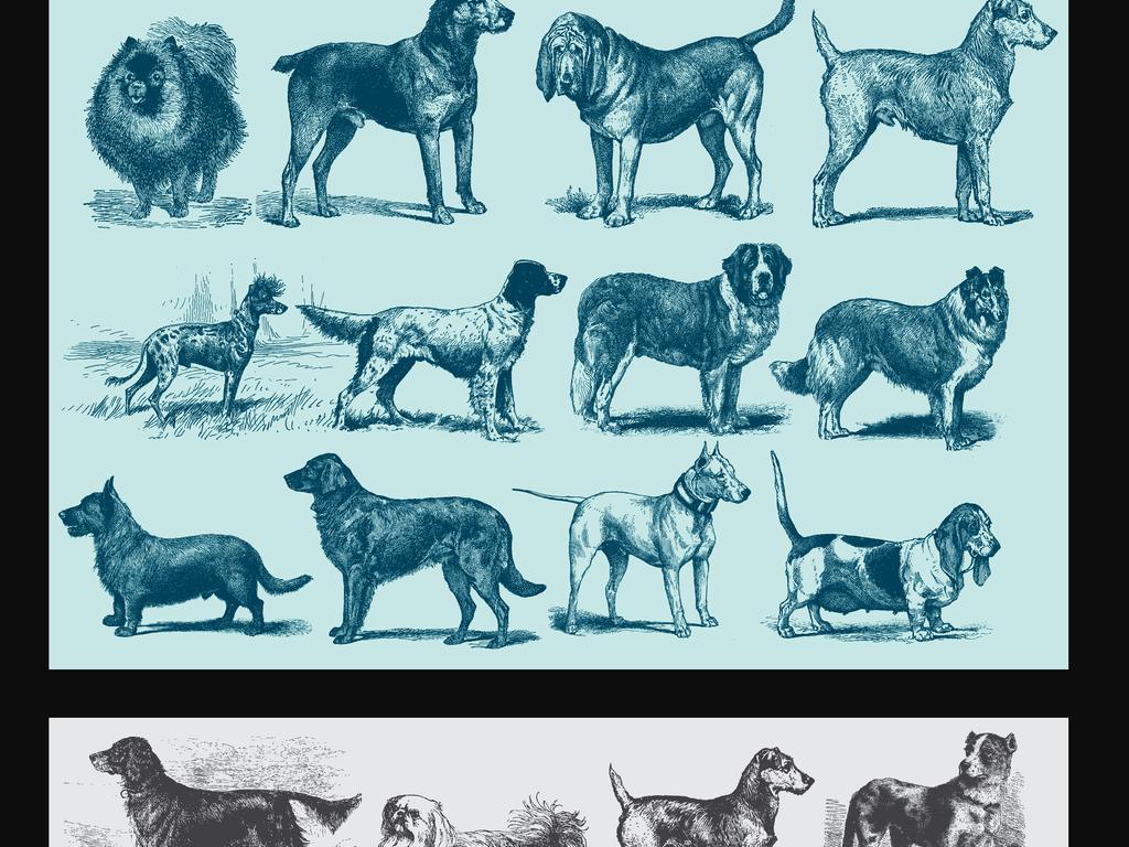 手绘素描狗宠物插画素材