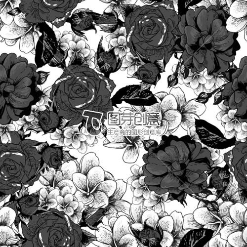 黑白花卉热带植物大花玫瑰花型商用授权