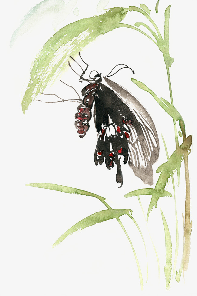 手绘                                    黑蝴蝶