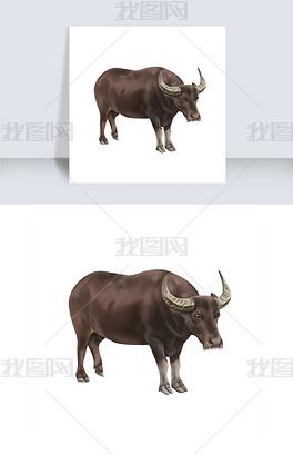 牧童水牛黄牛写实水牛绘画