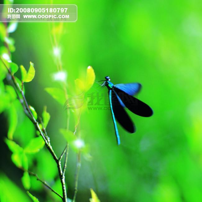 昆虫物语 动物与植物的和谐相处 昆.