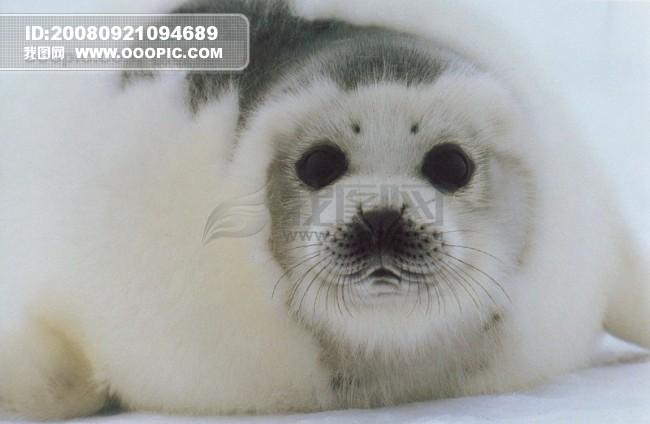 极地 动物 保护 海狮 冰雪 狗熊.