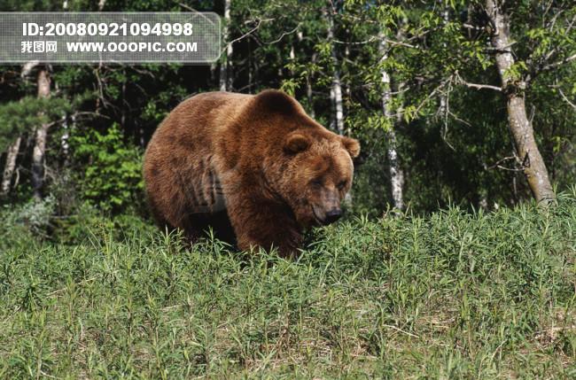 黑熊可爱照片