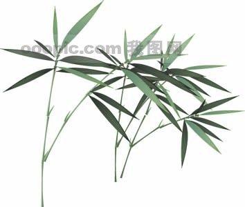 矢量竹子模板下载 矢量竹子图片下载