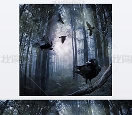 在森林里的乌鸦