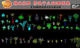 超精致植物景观平立面CAD图库