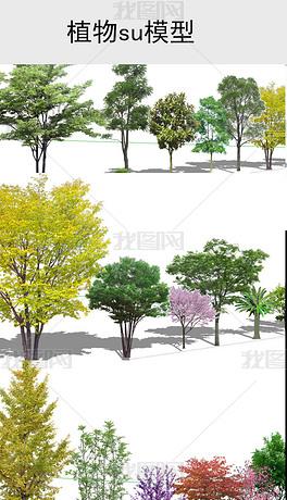 园林景观树木植物SU模型