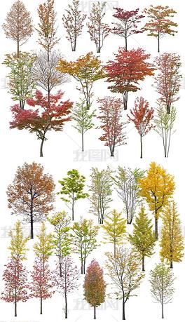 PSD树木植物近景高清绿化效果图后期PS