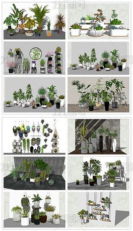 精品绿色植物绿色盆景室内绿色盆栽组合SU模型