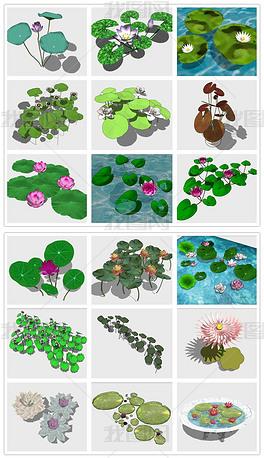 荷花荷叶莲花荷塘水生植物睡莲花池SU模型