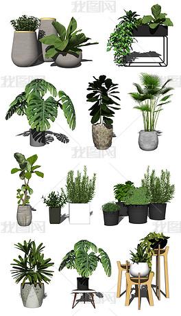 现代北欧花艺盆栽绿植植物摆件组合SU模型