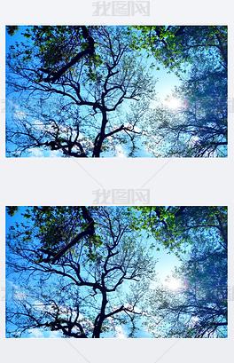 春天里的树影婆娑