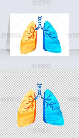 手绘肺部肺叶PNG