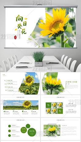 向日葵种植收获花开向日葵PPT