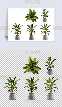 多视角热带芭蕉叶植物盘载免扣素材