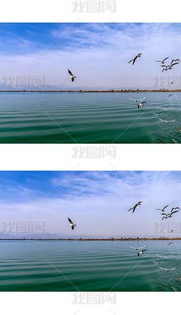 沙湖上飞翔的一群海鸥