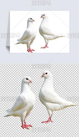 和平鸽子动物剪影矢量免扣元素png素材