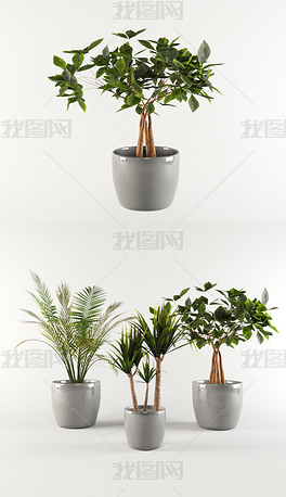 花卉3D精细模型