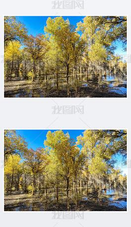 2021年酒泉金塔胡杨林黄叶